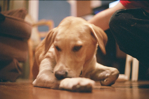 Why Do Dogs Have Fleas Healthy Food For Pet